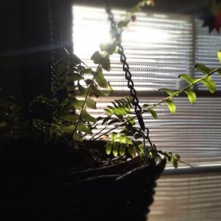 rac_cyoさんのお部屋写真 #1