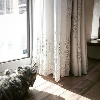 mamimamipockyさんのお部屋写真 #1