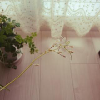 ikemenshunさんのお部屋写真 #1