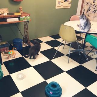 Shojiさんのお部屋写真 #1