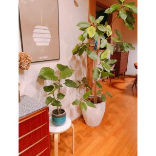 LOKKIさんのお部屋写真 #1