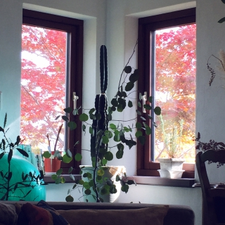 rosioさんのお部屋写真 #1