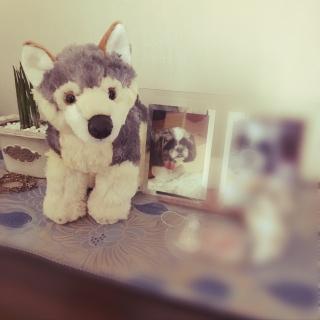 fukurouさんのお部屋写真 #1