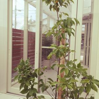 Naokoさんのお部屋写真 #1