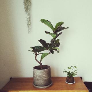 cocoyukoさんのお部屋写真 #1