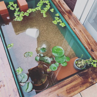 karuさんのお部屋写真 #1