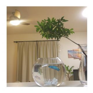 htmさんのお部屋写真 #1