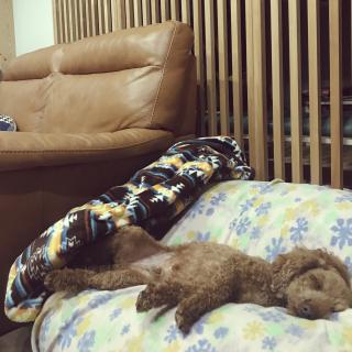 yukichi.wanwaさんのお部屋写真 #1