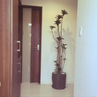 Miyuki1010さんのお部屋写真 #1