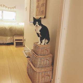 lovecatさんのお部屋写真 #1