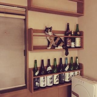 chocong0118さんのお部屋写真 #1