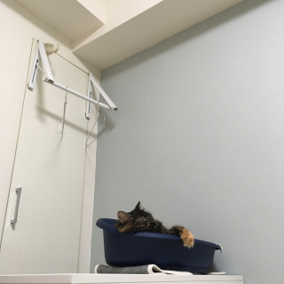 mikomaruさんのお部屋写真 #1