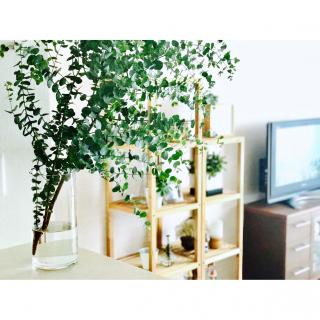 natsuminさんのお部屋写真 #1