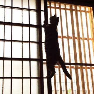 Mikan...necoさんのお部屋写真 #1