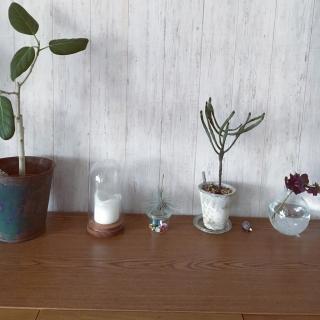 yuminkoさんのお部屋写真 #1