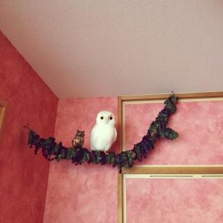 pyonsuさんのお部屋写真 #1