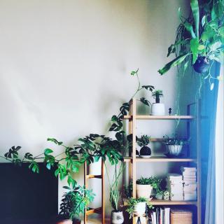 mirさんのお部屋写真 #1