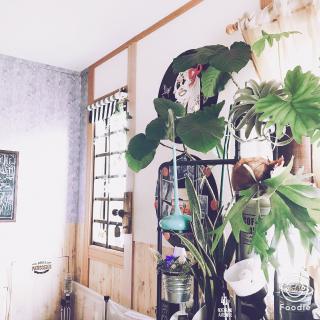 franさんのお部屋写真 #1