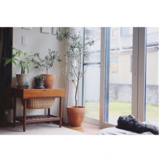 kurumin5さんのお部屋写真 #1