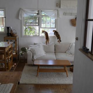 midoriさんのお部屋写真 #1