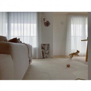 haruhinaさんのお部屋写真 #1