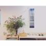 chanさんのお部屋写真 #5