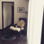 koharuさんのお部屋写真 #5