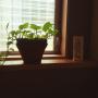 katuminaloveさんのお部屋写真 #3