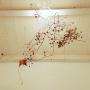 ichitaroさんのお部屋写真 #4