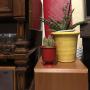 framelineさんのお部屋写真 #5