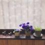 shizuさんのお部屋写真 #5