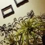 cocoroさんのお部屋写真 #4