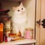 macaron_gallさんのお部屋写真 #5