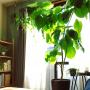mirさんのお部屋写真 #2