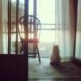 amelliaさんのお部屋写真 #2