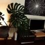 oliveさんのお部屋写真 #4