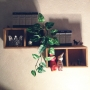 rikonguさんのお部屋写真 #2