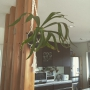 naturalwoodyさんのお部屋写真 #4