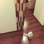 oniyomeさんのお部屋写真 #5