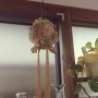 rietanさんのお部屋写真 #3