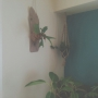 su--さんのお部屋写真 #2