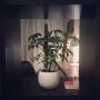 kazu_kiさんのお部屋写真 #4