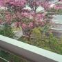 chajiさんのお部屋写真 #2
