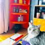 Shojiさんのお部屋写真 #4