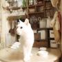 hanna-riさんのお部屋写真 #3