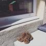 nenaさんのお部屋写真 #2