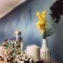 tarako_tenさんのお部屋写真 #4