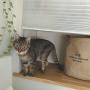 lovecatさんのお部屋写真 #4