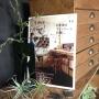 kaoringo.muimuiさんのお部屋写真 #2
