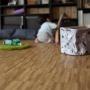 usaginohaijiさんのお部屋写真 #5